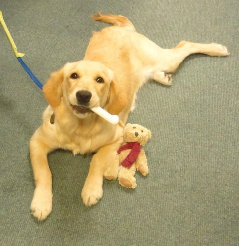 An update on Tilly, our guide dog puppy